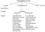 """Классификация эндокринной системы – Общая морфофункциональная характеристика эндокринной системы. Понятие о гормонах и """"клетках-мишенях"""". Классификация эндокринных желез."""