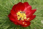 Красная книга растений – Самые редкие растения России — Энергосбережение, экопродукты, экодома, альтернативные источники энергии.