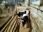 Животные калмыкии – Животные в Калмыкии — Сайт свежих объявлений о домашних и сельхоз животных Республики Калмыкия