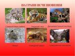 Доклад на тему животные из красной книги 4 класс – Сообщение об одном из животных международной Красной книги. Окружающий мир 4 класс 1 часть. Плешаков