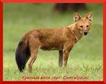 Доклад по окружающему миру 4 класс животные занесенные в красную книгу – Животные красной книги — сообщение 4 класс