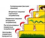 Пищевые цепочки – Пищевая цепь — Википедия