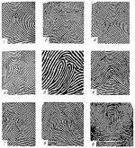 Виды следов пальцев рук – 1.3 Типы и виды папиллярных узоров пальцев рук. Следы рук человека как объект криминалистического исследования