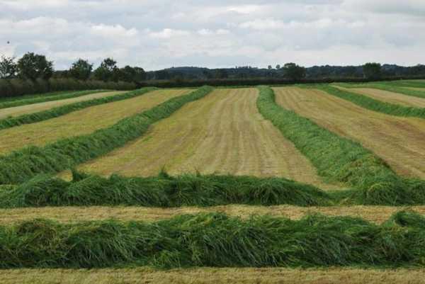 Сельское хозяйство в великобритании реферат 7652