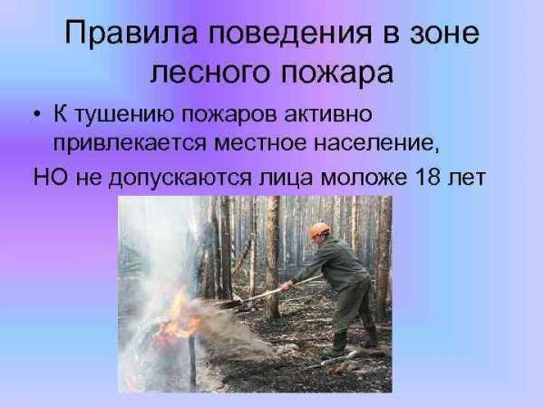 Дипломная работа лесные пожары 910