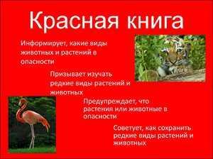 Доклад на тему животные и растения красной книги 3694